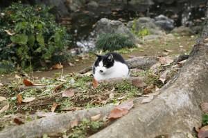 猫好き必見 「にゃんことわざ」単行本紹介